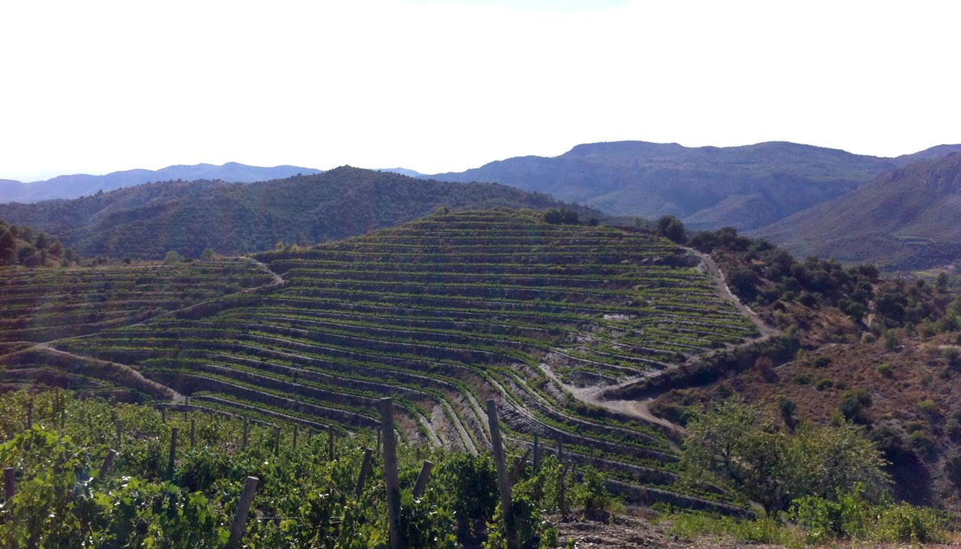 Zicht op de wijngaarden van Mas Igneus