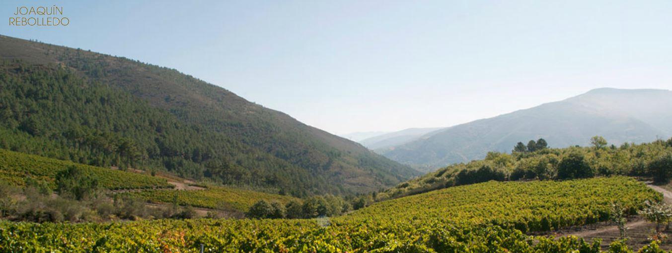 Wijngaard Rebolledo in Valdeorras
